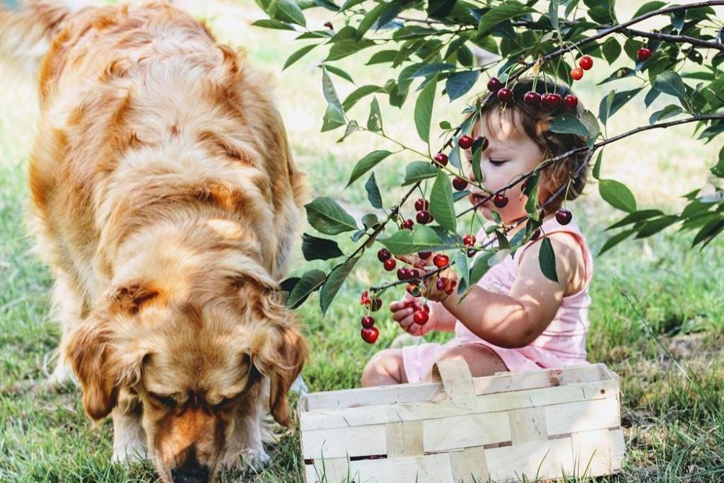 can-dogs-eat-fruits