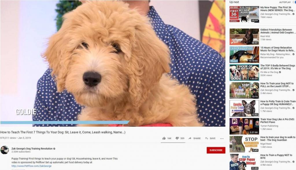 Dog-Training-Videos