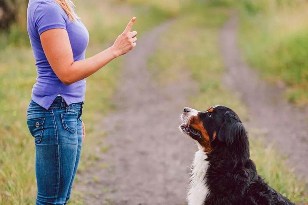 dogs-training-hand-signals