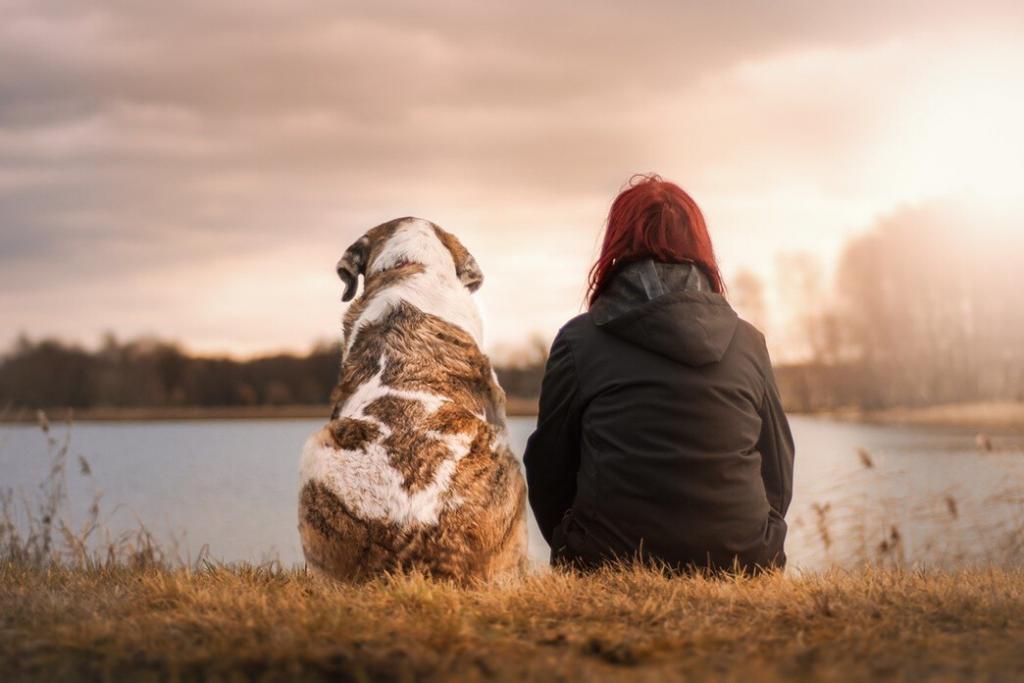 protection-dog-training