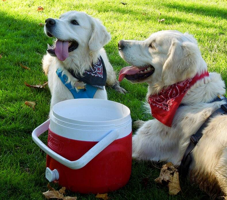 How-to-Get -a-Service-dog