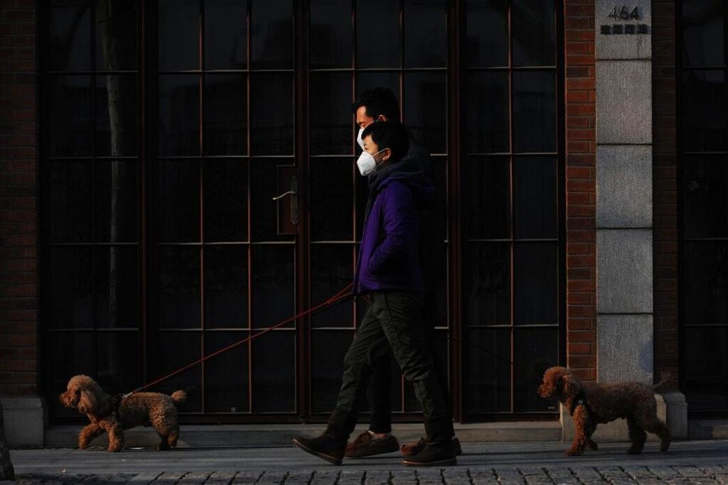can-your-dog-get-coronavirus