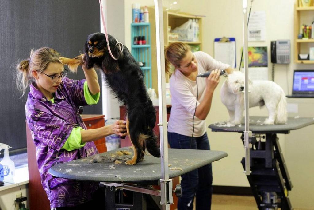dog-grooming-bathing