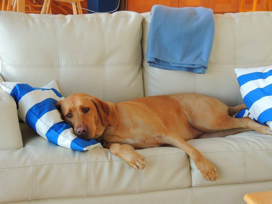 dog-sleeping-positions