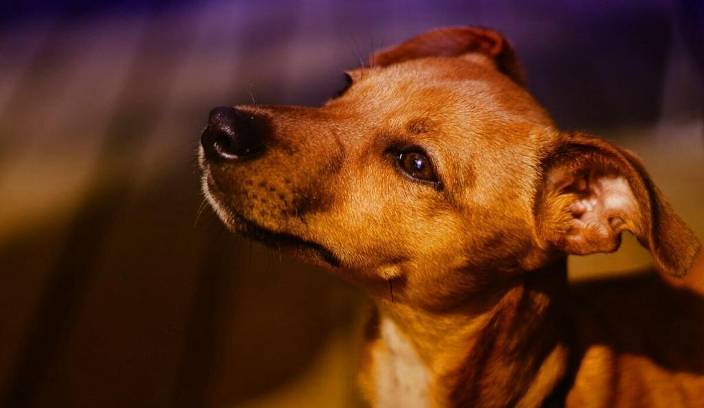 male-and-female-dog-names