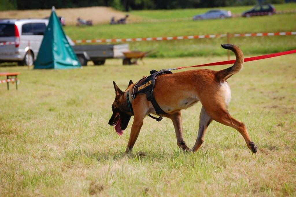 search-and-rescue-dog-training