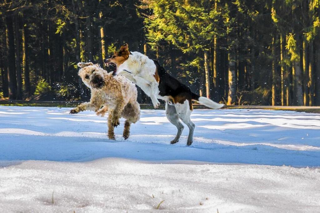 dog-zoomies