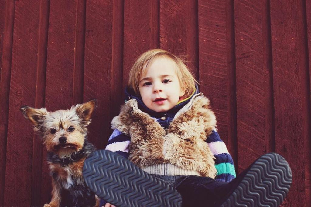 how-big-do-yorkshire-terriers-gets