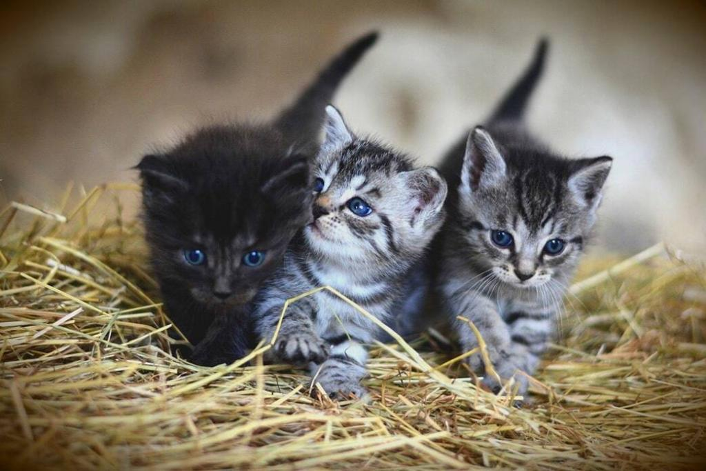 kittens-meowing