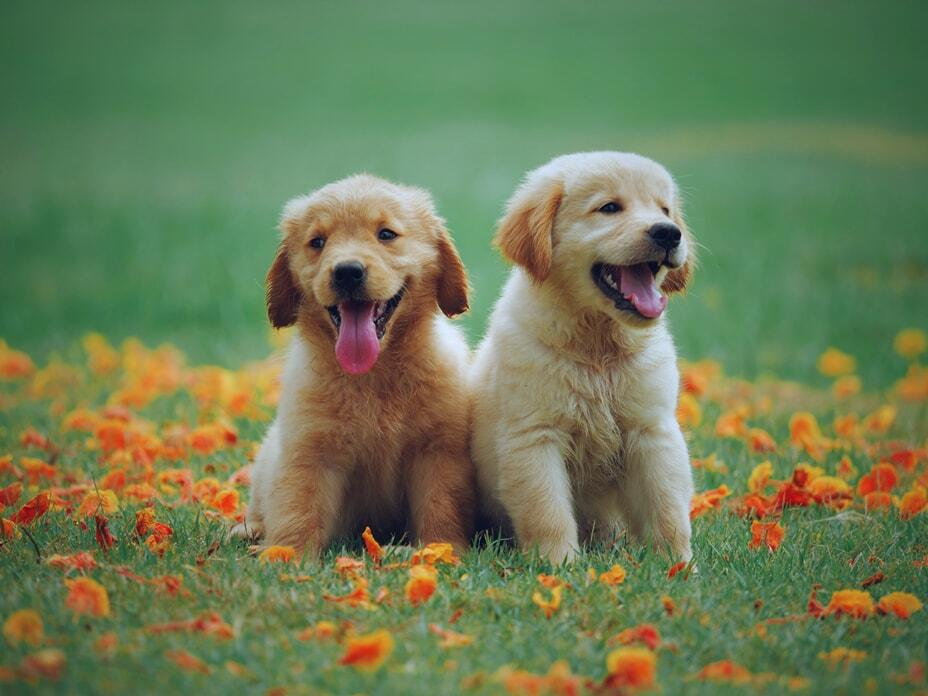 benefits-of-grain-free-diet-for-dogs