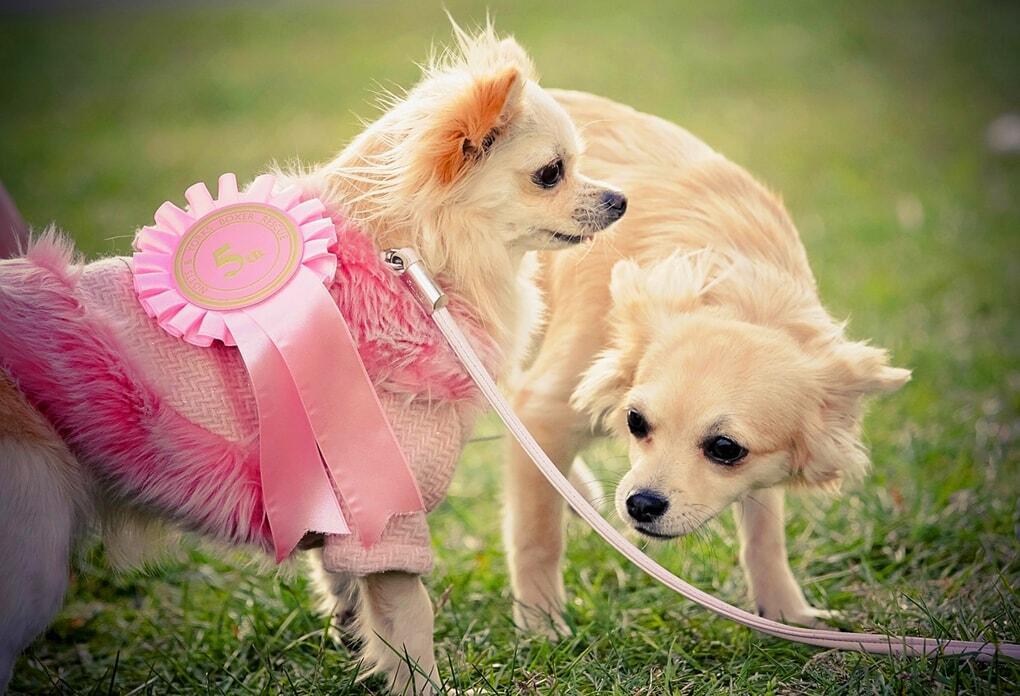 dog-breeds-under-30-pounds
