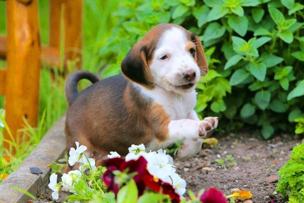 dog-lifting-leg