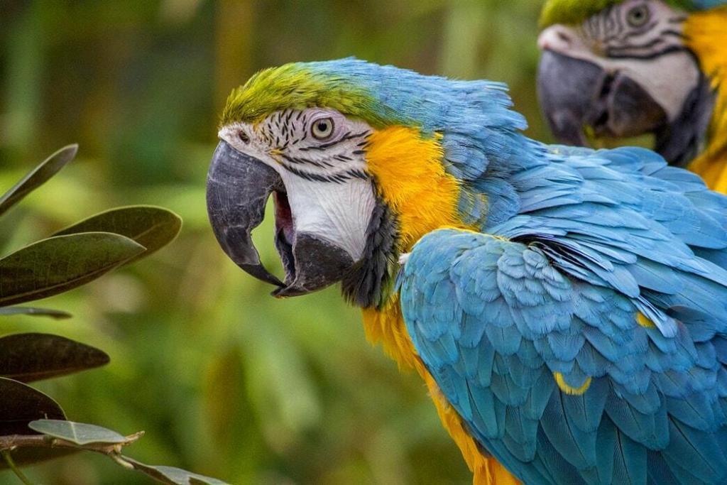 parrot-beak-care