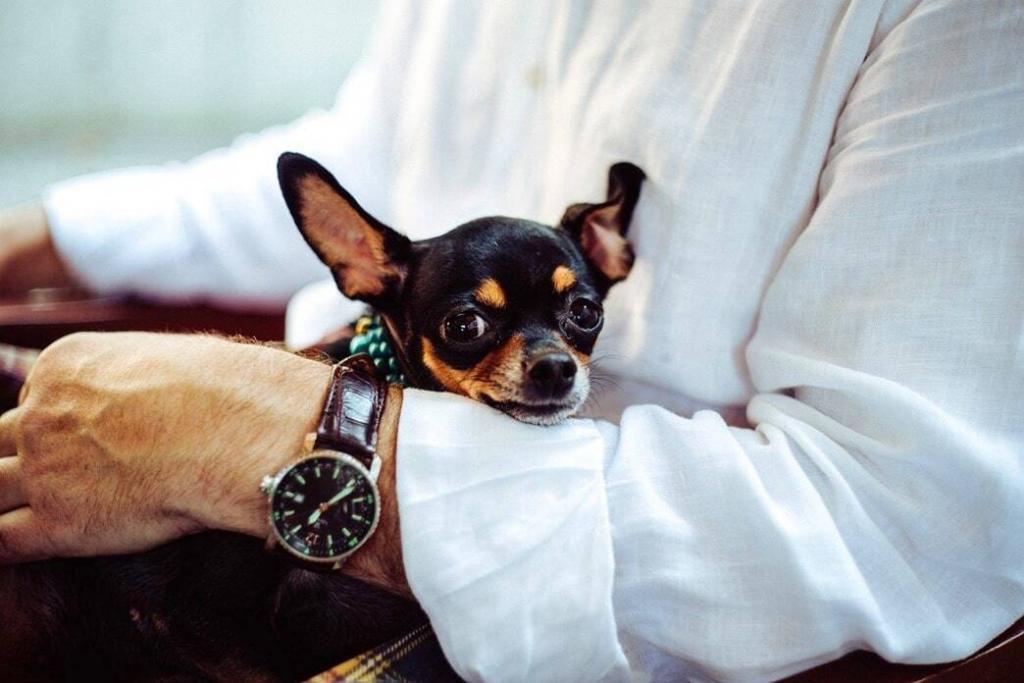 smallest-dog-breeds-under-10-pounds