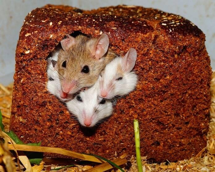 fleece-bedding-for-pet-rats