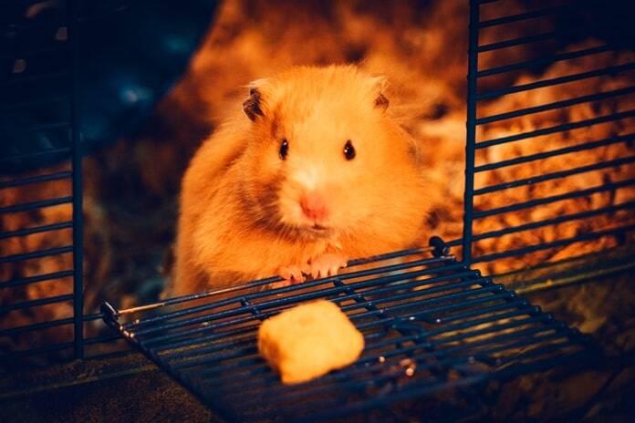 pet-rat-cage-calculator