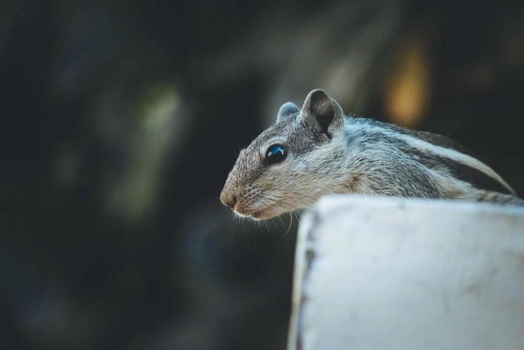 what-foods-are-safe-for-pet-rats