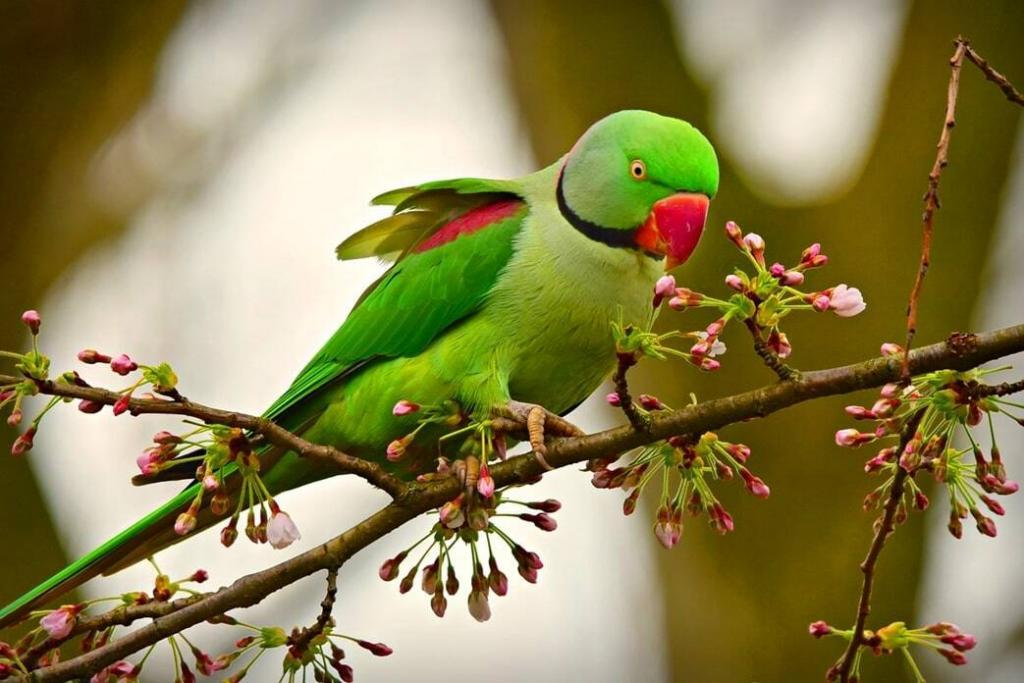 are-parakeets-good-pets