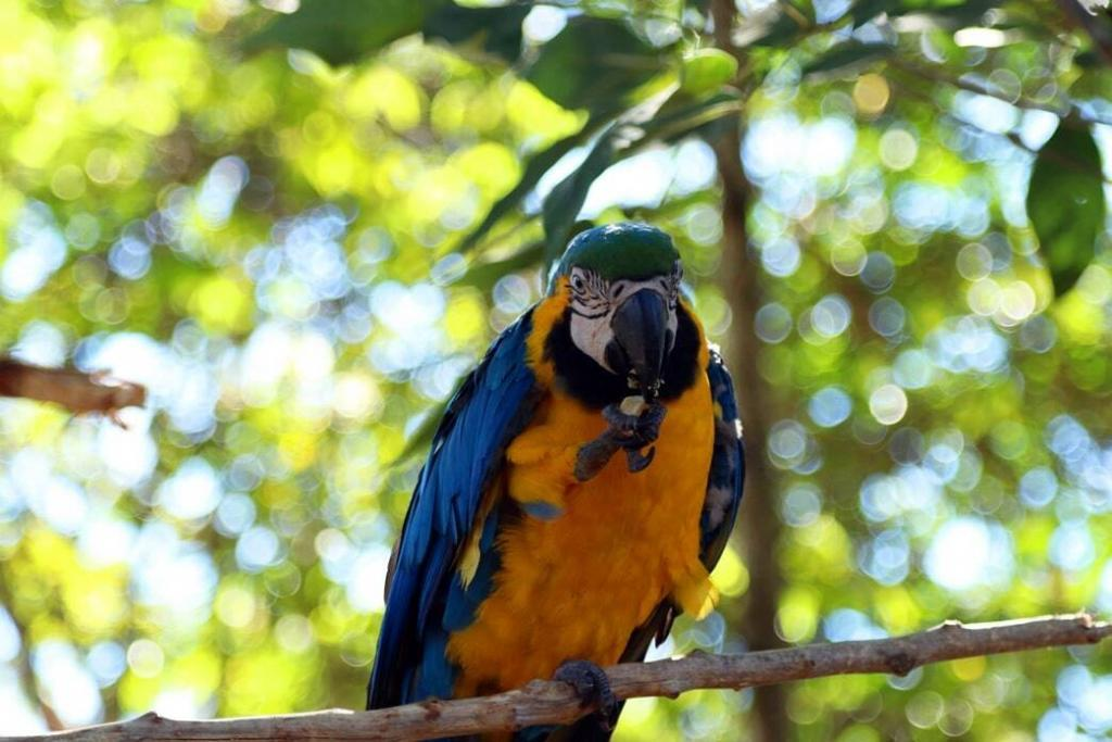 what-do-macaws-eat