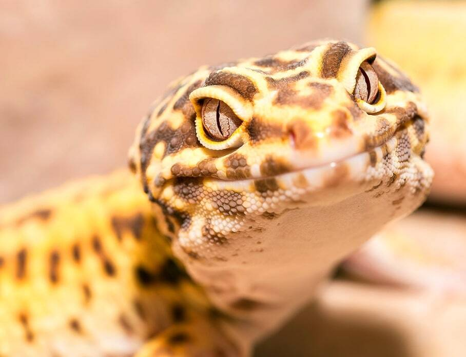 best-reptile-pets-for-kids 01