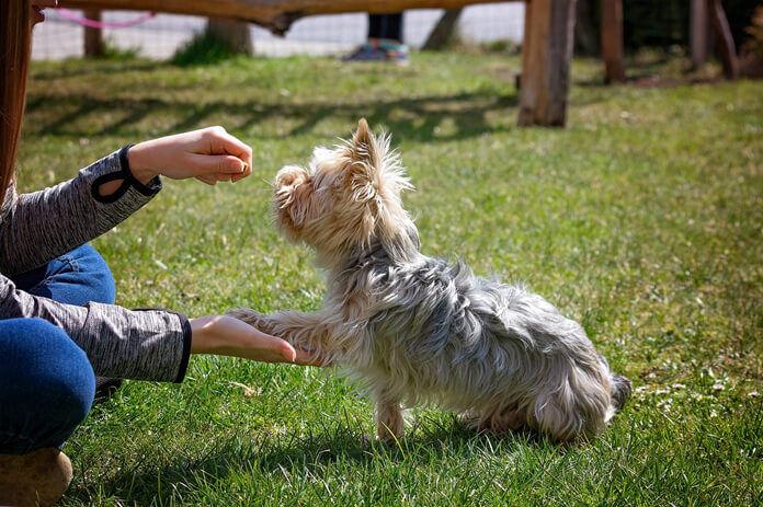 anti-barking-device-2