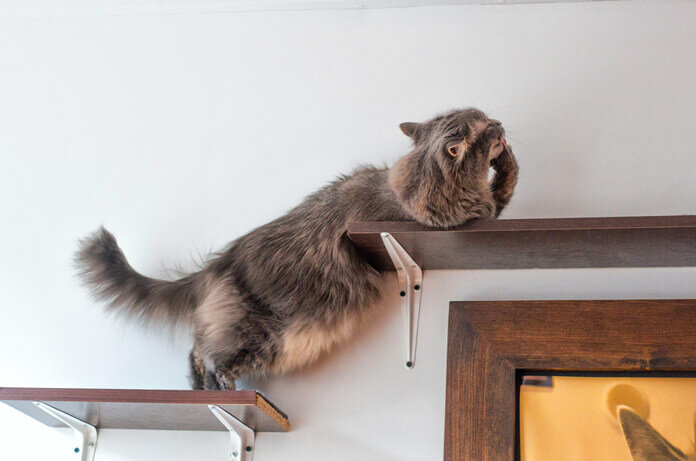 the-pros-and-cons-of-cat-wall-shelves-perches