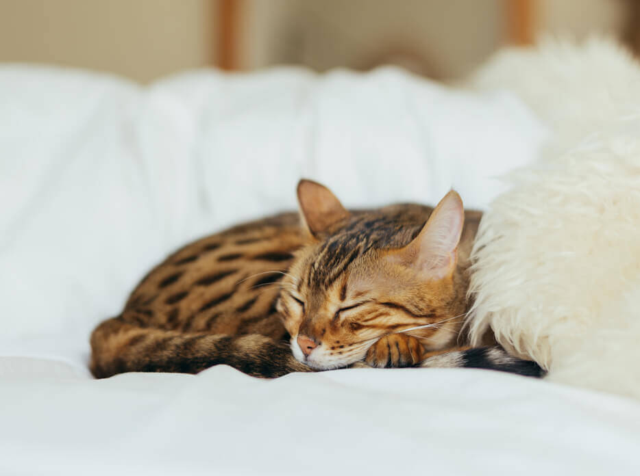 can-cats-get-colds-02