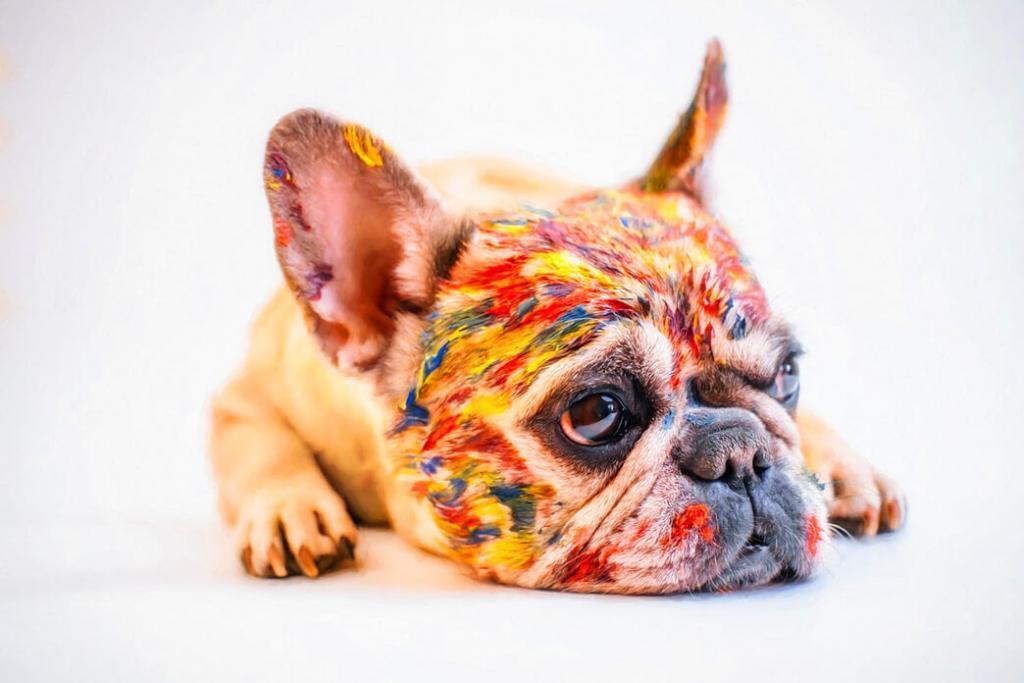 french-bulldog-colors