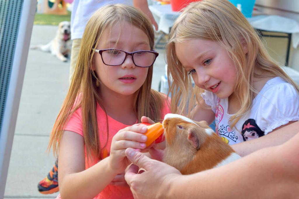 can-guinea-pigs-eat-cantaloupe