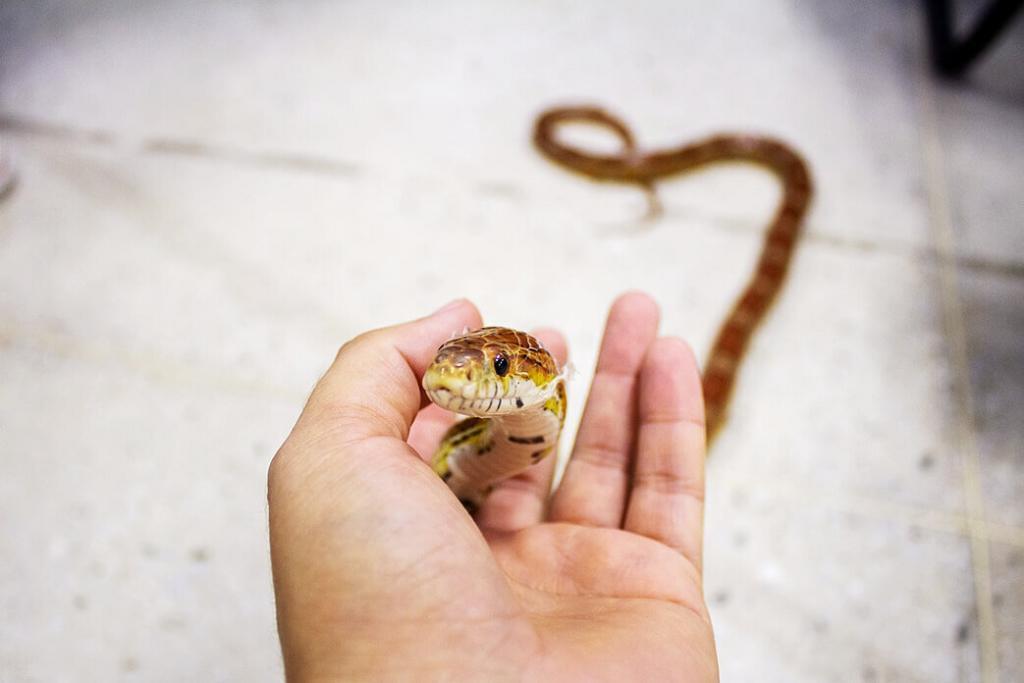 can-snakes-feel-love