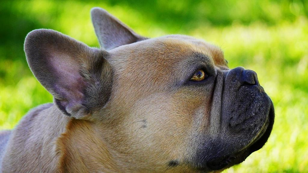 dog-gagging-but-not-throwing-up