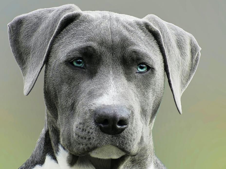 dog-years