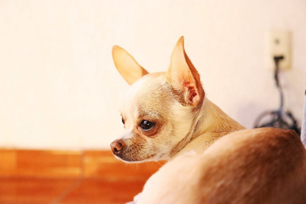 how-do-you-get-rid-of-mites-on-a-dog