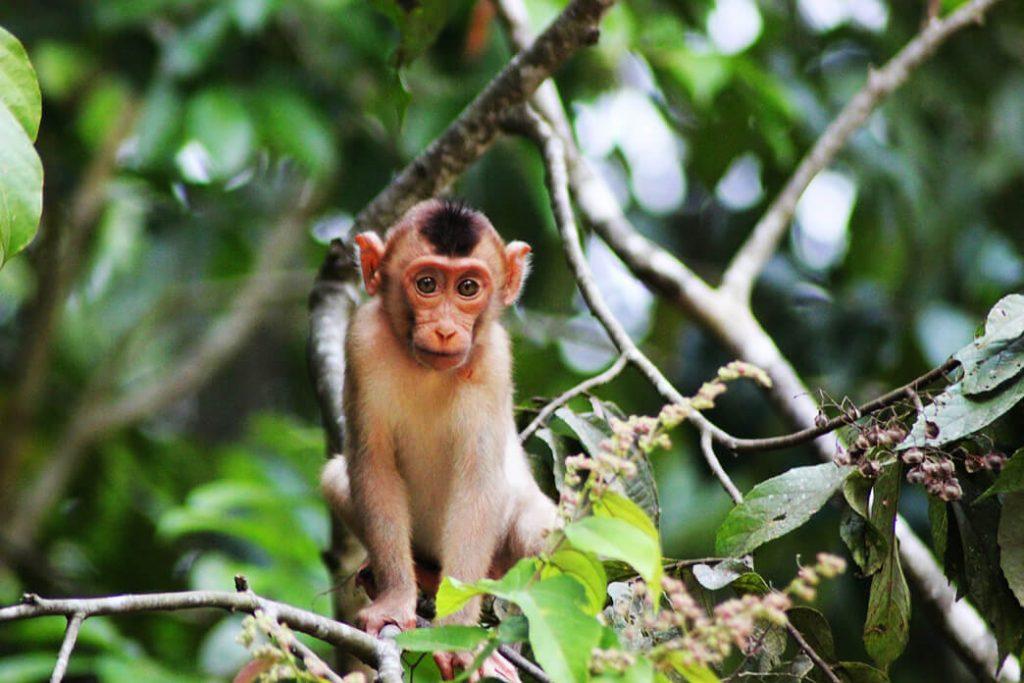 small-monkey-breeds