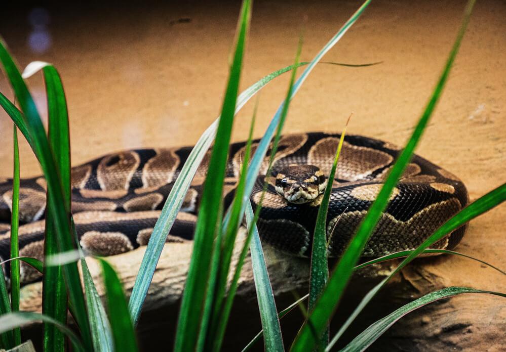 what-do-snake-eggs-look-like