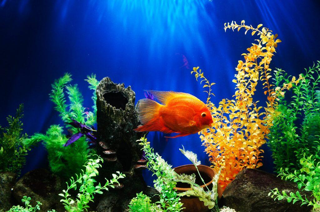 aquarium-weight