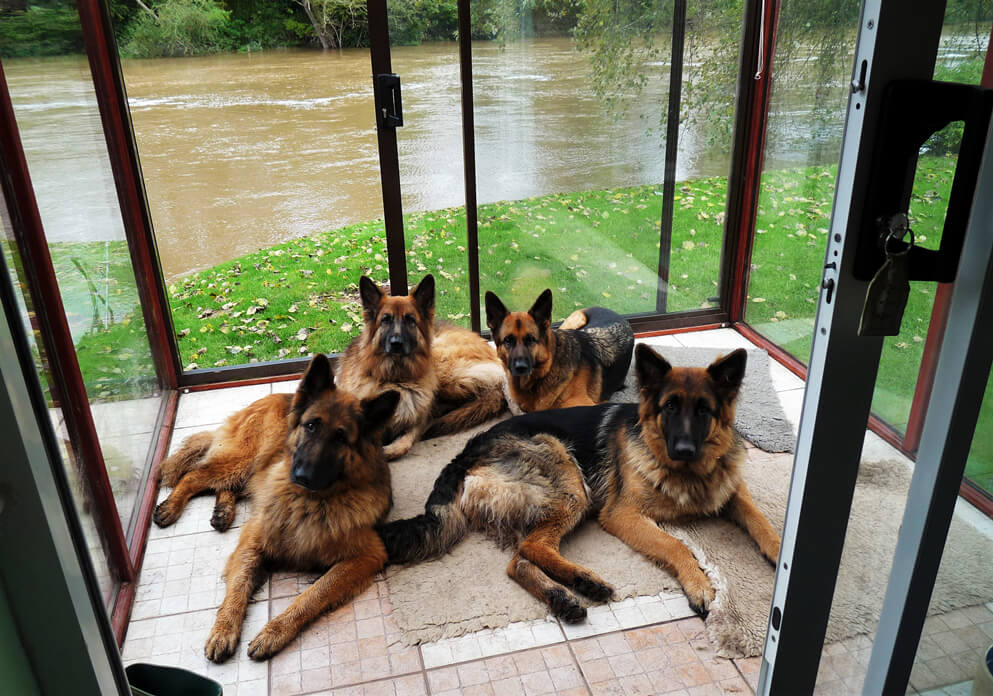are-german-shepherds-good-with-kids